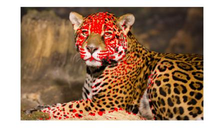 hw04_leopard2_earing_corners